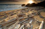 Illatolaj Uszadékfa (Driftwood)