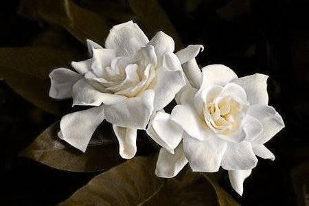 Illatolaj Vintage gardenia