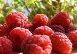 Illatolaj Napon érett málana (Sun Ripened Raspberry)