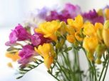 Virág illatú illatolajok