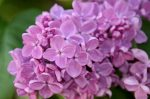 Illatolaj Sensory Orgona (Lilac)10ml