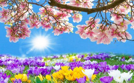 Illatolaj Pipere Tavaszi szellő  10ml