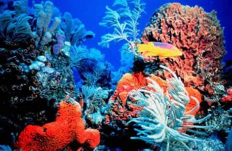 Illatolaj Pipere Korallvirág 30ml