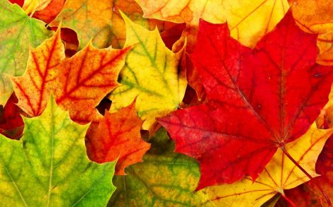 Illatolaj Sensory Őszi falevelek (Autumn leaves) 30ml