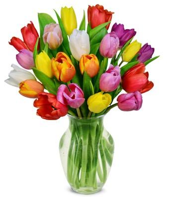 Illatolaj Sensory Tulipán (Sweet Tulip) 50ml