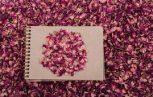 Szárazvirágok